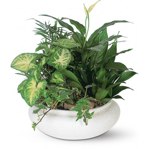 Medium Dish Garden by Teleflora
