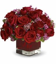 Never Let Go - 24 Compact Style Red Roses
