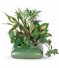 Small Garden Dish by Teleflora